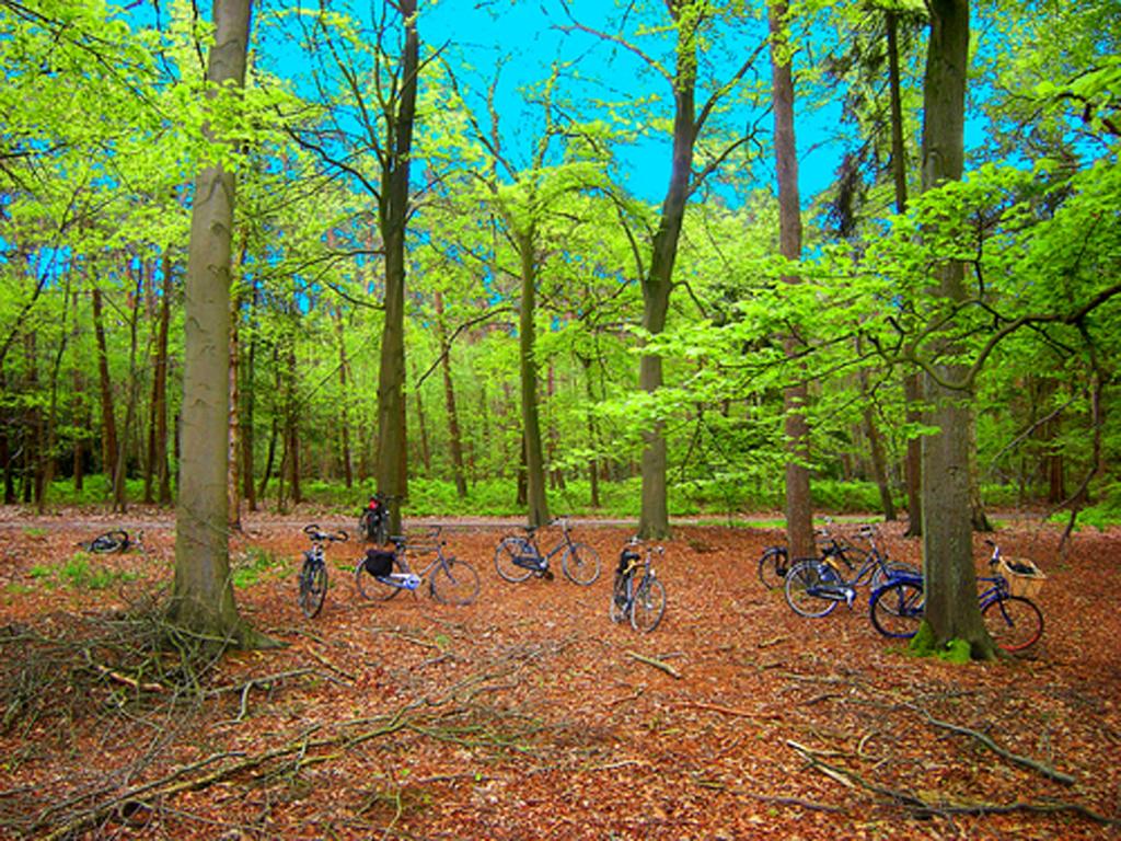 2012-8917 nederm hondsd fietsen PHOTO GUSTAVE PETIT