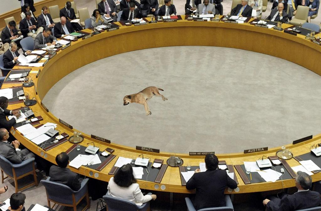 2013 - Veiligheidsraad slpnd hond idee en beeld Gustave Petit