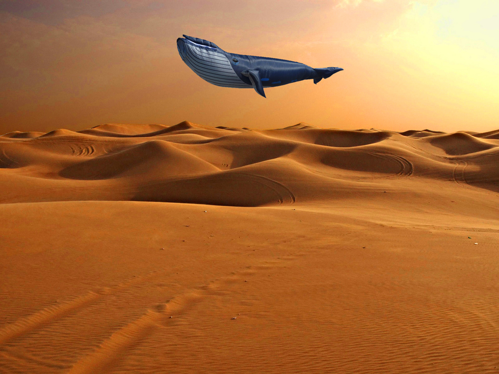 2013 - walvis boven woestijn FOTO GUSTAVE PETIT