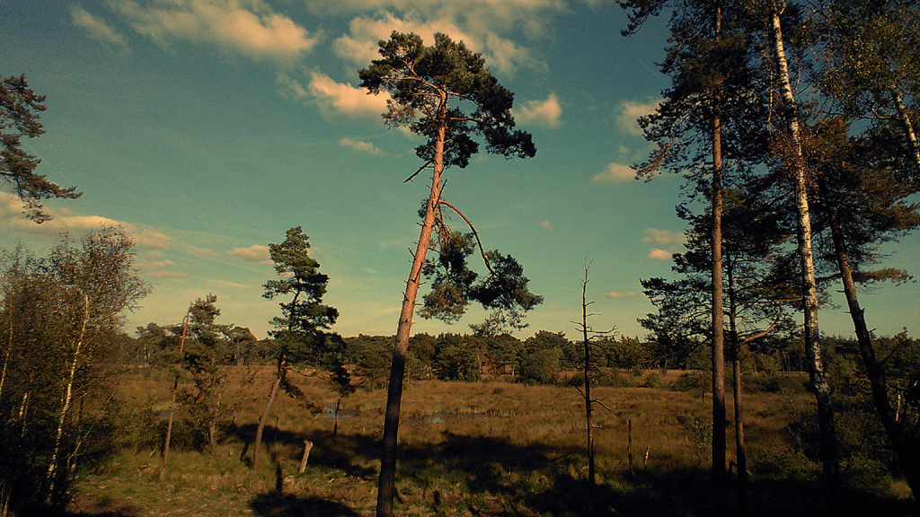 2015 slimfoon savanne strijbeekse heide PHOTO GUSTAVE PETIT